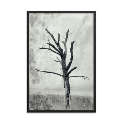 Rotting Away Alone Black and White Botanical Nature Photo Framed Wall Art Print