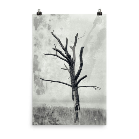 Rotting Away Alone Black and White Botanical Nature Photo Loose Unframed Wall Art Prints