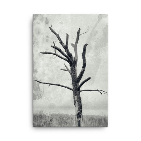 Rotting Away Alone Black and White Floral Nature Canvas Wall Art Prints