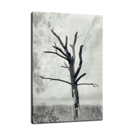 Rotting Away Alone Botanical / Nature Photo Fine Art Canvas Wall Art Prints