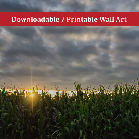 Rows of Corn Landscape Photo DIY Wall Decor Instant Download Print - Printable