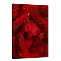 Royal Red Rose Nature / Floral Photo Fine Art Canvas Wall Art Prints  - PIPAFINEART