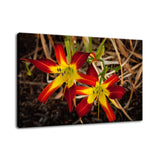 Royal Sunset Lily Nature / Floral Photo Fine Art Canvas Wall Art Prints  - PIPAFINEART