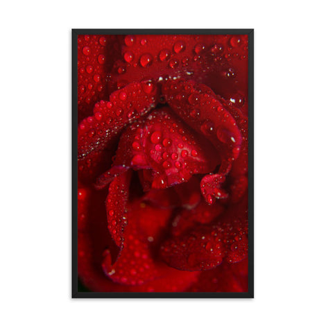 Royal Red Rose Floral Nature Photo Framed Wall Art Print
