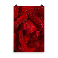 Royal Red Rose Floral Nature Photo Loose Unframed Wall Art Prints  - PIPAFINEART
