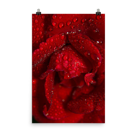 Royal Red Rose Floral Nature Photo Loose Unframed Wall Art Prints