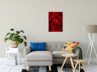 "Royal Red Rose Nature / Floral Photo Fine Art Canvas Wall Art Prints 20"" x 30"" / Fine Art Canvas - PIPAFINEART"