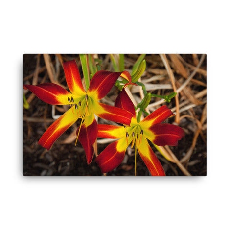 Royal Sunset Lily Floral Nature Canvas Wall Art Prints