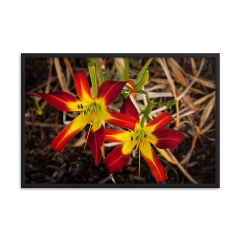 Royal Sunset Lily Floral Nature Photo Framed Wall Art Print