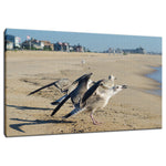 Screaming Gull Animal / Wildlife Photograph Fine Art Canvas & Unframed Wall Art Prints  - PIPAFINEART