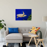 "Sea Turtle 1 Animal / Wildlife Photograph Fine Art Canvas & Unframed Wall Art Prints 24"" x 36"" / Canvas Fine Art - PIPAFINEART"