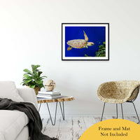 "Sea Turtle 1 Animal / Wildlife Photograph Fine Art Canvas & Unframed Wall Art Prints 24"" x 36"" / Classic Paper - Unframed - PIPAFINEART"
