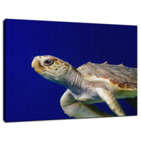 Sea Turtle 2 Animal / Wildlife Photograph Fine Art Canvas & Unframed Wall Art Prints  - PIPAFINEART