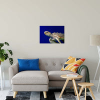 "Sea Turtle 2 Animal / Wildlife Photograph Fine Art Canvas & Unframed Wall Art Prints 20"" x 24"" / Canvas Fine Art - PIPAFINEART"