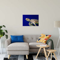 "Sea Turtle 2 Animal / Wildlife Photograph Fine Art Canvas & Unframed Wall Art Prints 20"" x 30"" / Canvas Fine Art - PIPAFINEART"
