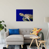 "Sea Turtle 2 Animal / Wildlife Photograph Fine Art Canvas & Unframed Wall Art Prints 24"" x 36"" / Canvas Fine Art - PIPAFINEART"