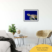 "Sea Turtle 2 Animal / Wildlife Photograph Fine Art Canvas & Unframed Wall Art Prints 20"" x 30"" / Classic Paper - Unframed - PIPAFINEART"
