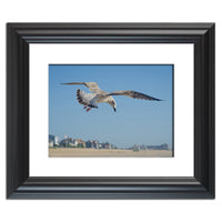 Seagull in Flight Animal / Wildlife Photograph Fine Art Canvas & Unframed Wall Art Prints - PIPAFINEART