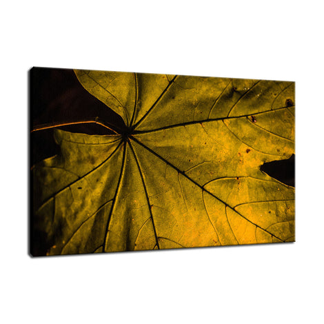 Seasons Change Botanical / Nature Photo Fine Art Canvas Wall Art Prints