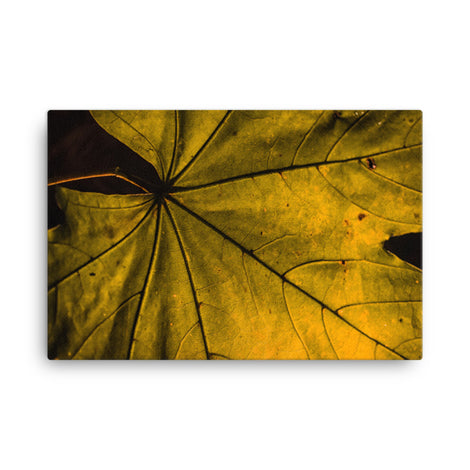 Seasons Change Botanical Nature Canvas Wall Art Prints