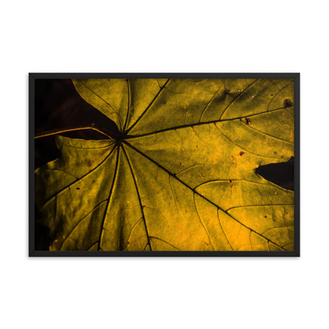 Seasons Change Botanical Nature Photo Framed Wall Art Print