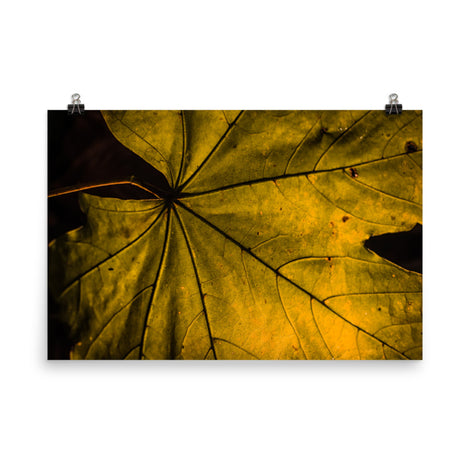 Seasons Change Botanical Nature Photo Loose Unframed Wall Art Prints