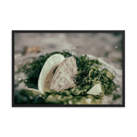 Seaweed and Shells Coastal Nature Photo Framed Wall Art Print