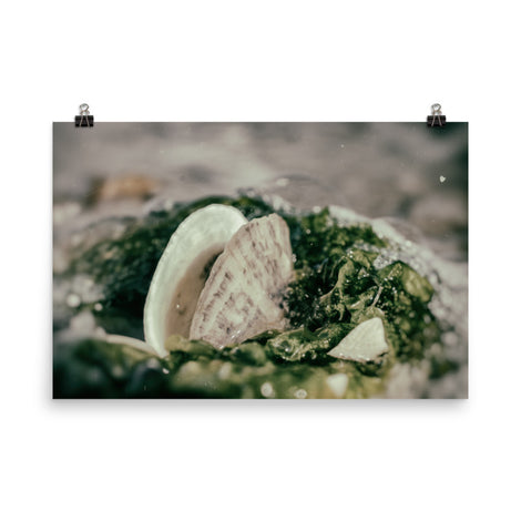 Seaweed and Shells Coastal Nature Photo Loose Unframed Wall Art Prints