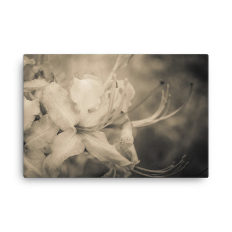 Sepia Aged Rhododendron Blooms Floral Nature Canvas Wall Art Prints