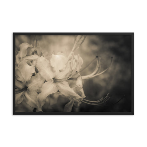 Sepia Aged Rhododendron Blooms Floral Nature Photo Framed Wall Art Print