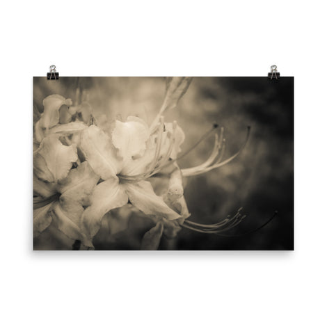 Sepia Aged Rhododendron Blooms Floral Nature Photo Loose Unframed Wall Art Prints
