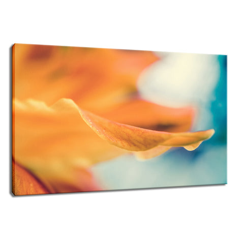 Serene Petals of Life Nature / Floral Photo Fine Art Canvas Wall Art Prints