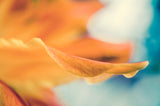 Serene Petals of Life Nature / Floral Photo Fine Art & Unframed Wall Art Prints - PIPAFINEART