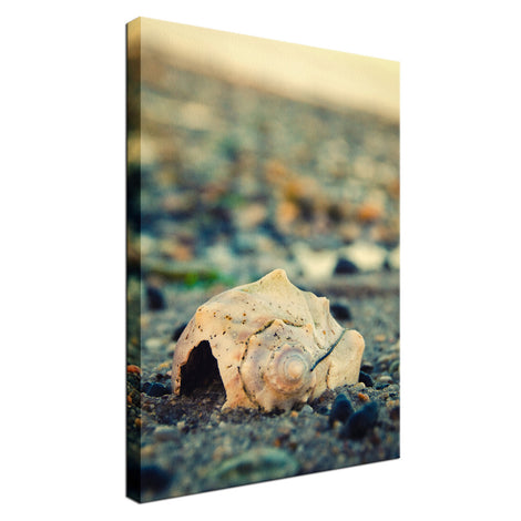 Shell at Bowers Beach Nature / Coastal Photo Fine Art Canvas Wall Art Prints