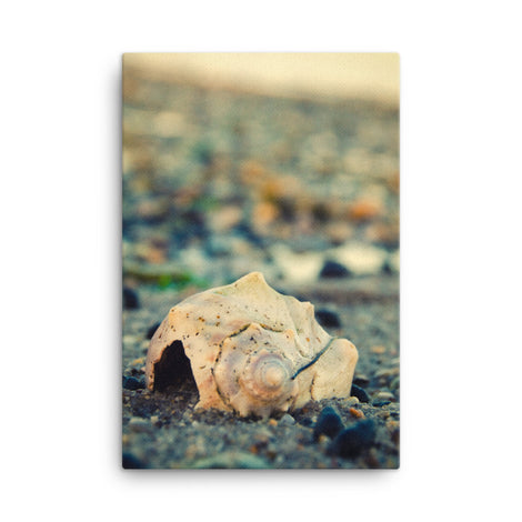 Shell at Bowers 2 Coastal Nature Canvas Wall Art Prints