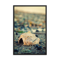 Shell at Bowers 2 Coastal Nature Photo Framed Wall Art Print  - PIPAFINEART