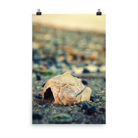 Shell at Bowers 2 Coastal Nature Photo Loose Unframed Wall Art Prints