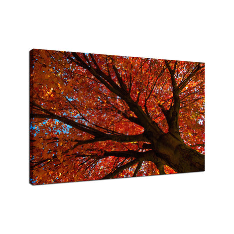Shimmering Orange Autumn Tree Nature / Botanical Photo Fine Art Canvas Wall Art Prints