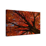 Shimmering Orange Autumn Tree Nature / Botanical Photo Fine Art Canvas Wall Art Prints  - PIPAFINEART
