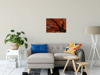 "Shimmering Orange Autumn Tree Nature / Botanical Photo Fine Art Canvas Wall Art Prints 20"" x 30"" - PIPAFINEART"