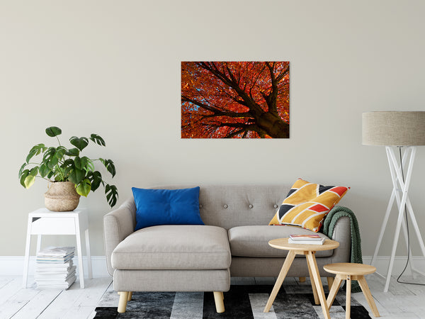 Nature Photography - Shimmering Orange Autumn Tree - Fine Art Canvas - Home Decor Unframed Wall Art Prints
