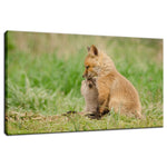 Sibling Kisses - Baby Red Fox Animal / Wildlife Photograph Fine Art Canvas & Unframed Wall Art Prints  - PIPAFINEART