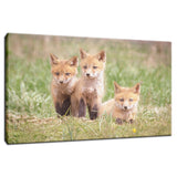 Siblings Animal / Wildlife Photograph Fine Art Canvas & Unframed Wall Art Prints - PIPAFINEART