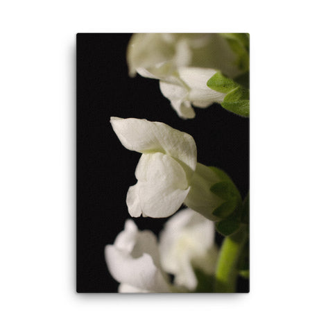Single Snapdragon Bloom Floral Nature Canvas Wall Art Prints