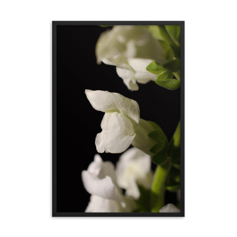 Single Snapdragon Bloom Floral Nature Photo Framed Wall Art Print