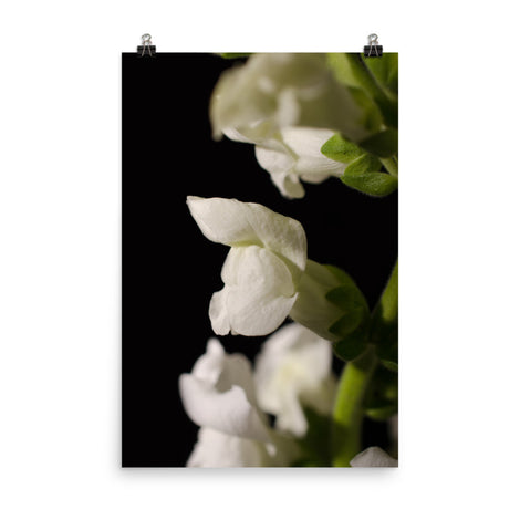 Single Snapdragon Bloom Floral Nature Photo Loose Unframed Wall Art Prints