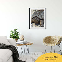 "Smiling Turtle Animal / Wildlife Photograph Fine Art Canvas & Unframed Wall Art Prints 24"" x 36"" / Classic Paper - Unframed - PIPAFINEART"