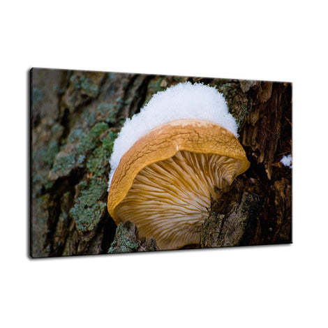 Snow Fungus Botanical / Nature Photo Fine Art Canvas Wall Art Prints