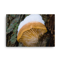 Snow Fungus Botanical Nature Canvas Wall Art Prints  - PIPAFINEART