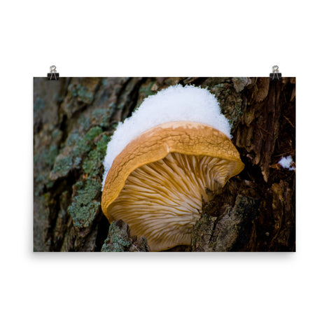 Snow Fungus Botanical Nature Photo Loose Unframed Wall Art Prints